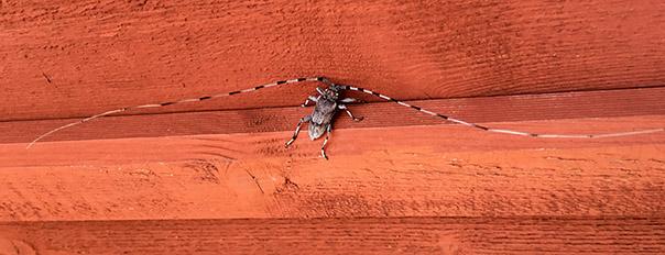 IMG_2901_insekt